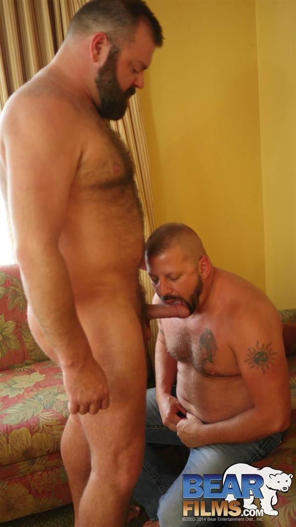 Hairy bears fucking