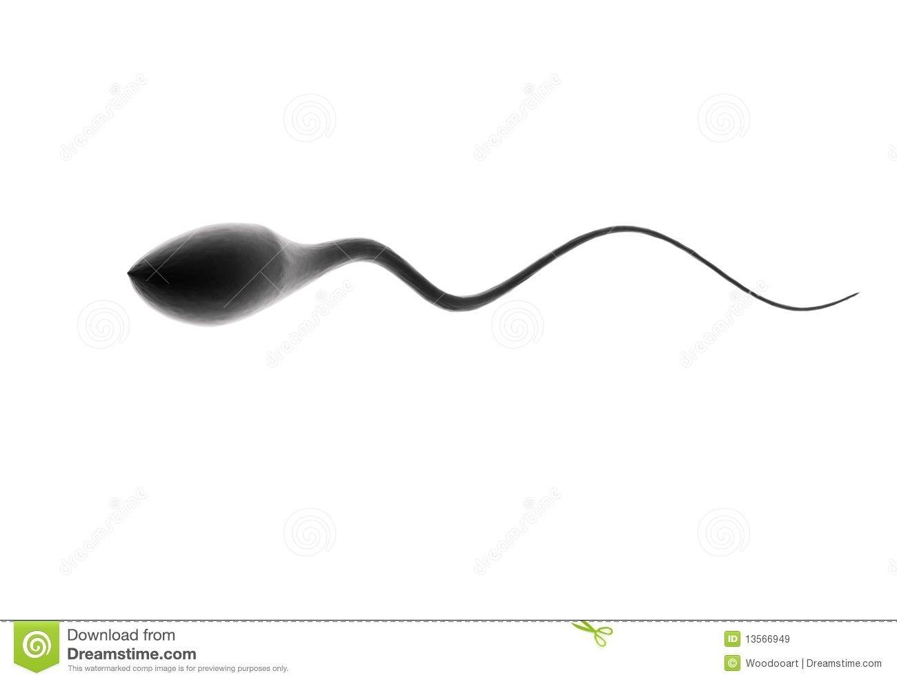 best of Of sperm Images human
