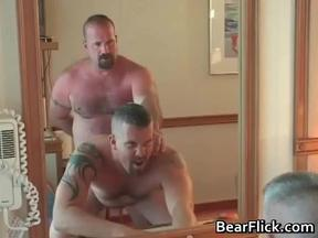 free video bear Gay