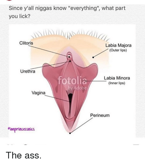 Vulva anatomy 2018 jelsoft enterprises ltd