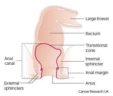 Anus porn rectum pictures